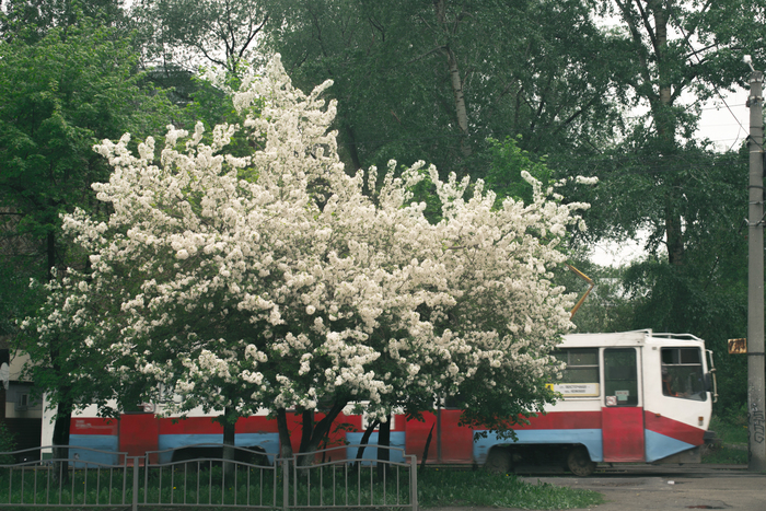 Весны и трамвая пост) Фотография, Начинающий фотограф, Весна, Хочу критики, Длиннопост