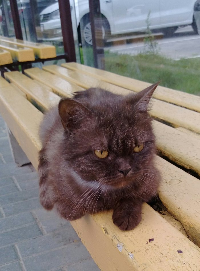Кто потерял? Минск, р-н Юго-Запад Кот, Без рейтинга, Найден кот, Минск, Длиннопост, Ищу хозяина, В добрые руки