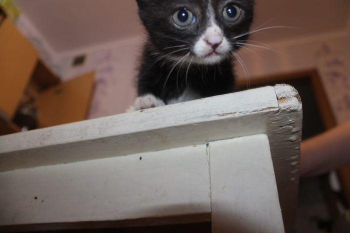 Отдадим котят в Уссурийске Котята, Халява, Котомафия, Уссурийск, Сила пикабу, Длиннопост, Кот, В добрые руки, Без рейтинга