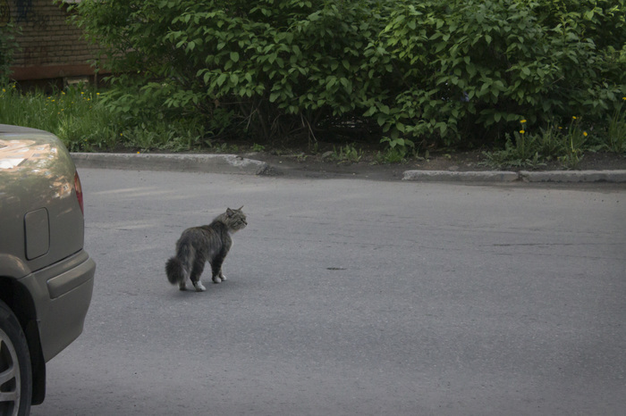 Которепортаж ч.1: Кот-экстремал. Кот, Дорога, Слабоумие и отвага, Длиннопост