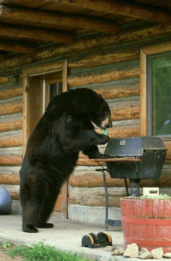 """""""Сейчас шашлык приготовлю, вкусно будет!"""" Фотография, Медведь, Мангал"""