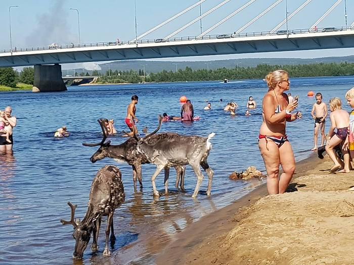 О климате Олень, Пляж, Жара, Финляндия, Фотография