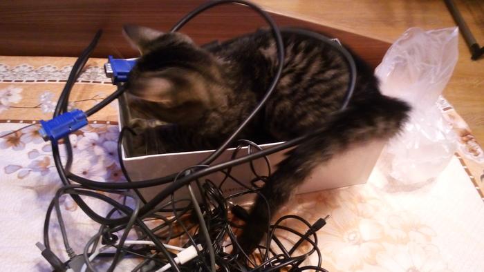 Слепой кот Хёд. Кот, Слепой кот Хёд, Длиннопост