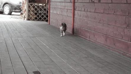 Кот Ромка, который вырос на конюшне, умеет бегать рысью