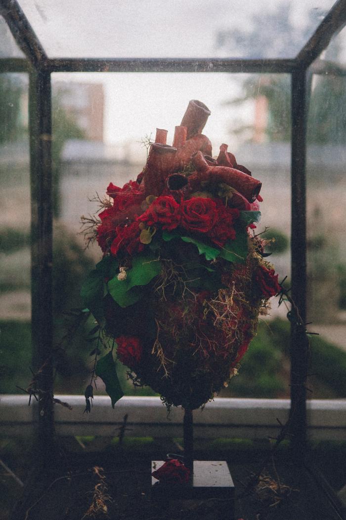 Аптекарский огород Сердце, Легкие, Выставка, Аптекарский огород, Длиннопост, Москва