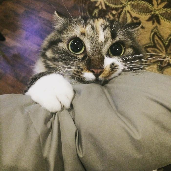 Омномном... Трехцветная кошка, Девочка, Пушистое мимими, Длиннопост, Кот
