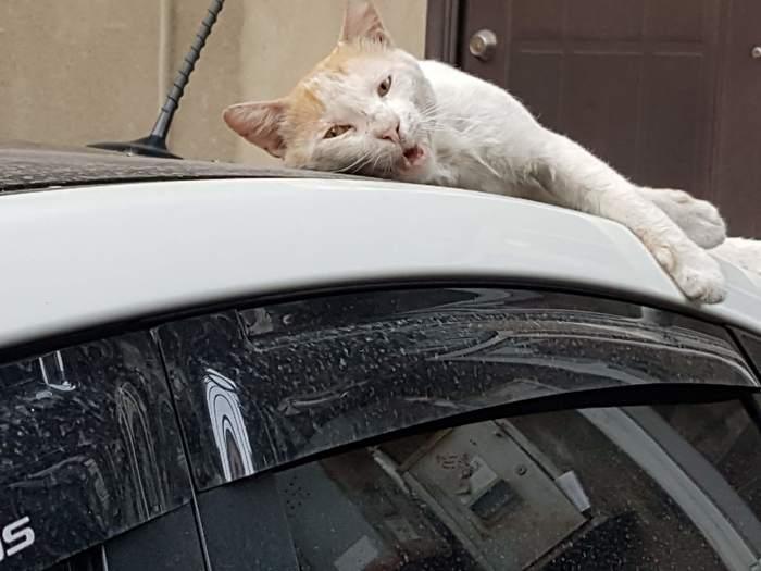 Один день из жизни тбилисского кота Кот, Котомафия, Зевота, Сон, Милота, Длиннопост
