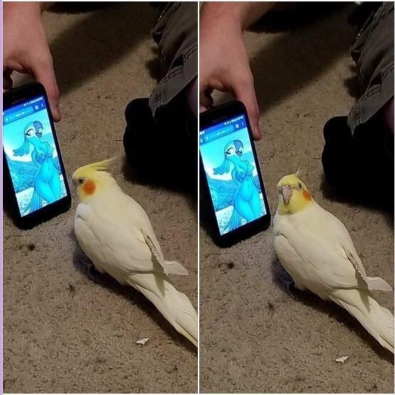 Этот попугай выглядит так, будто осуждает своего хозяина за то, что он показывает ему это.
