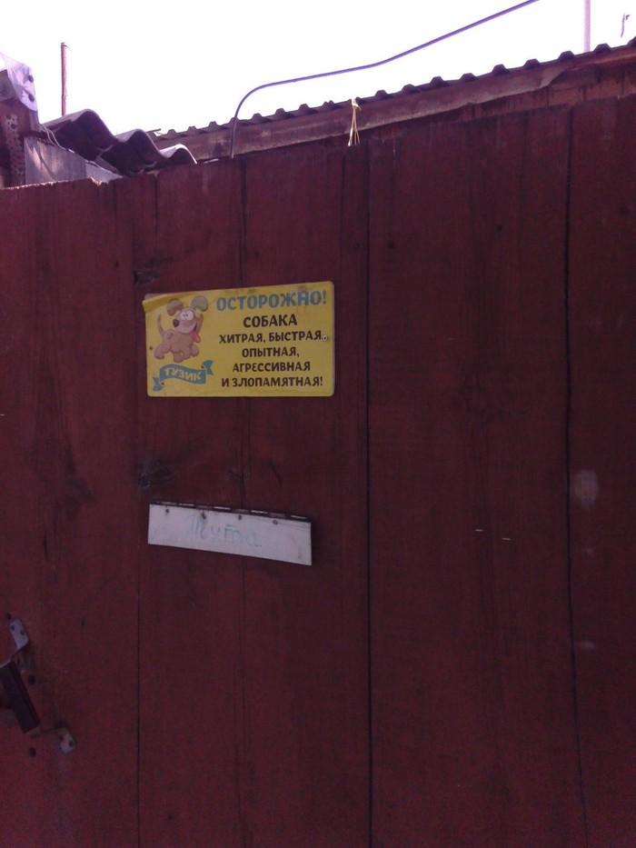 Привет в Барнаул. Барнаул, Собака, Фотография