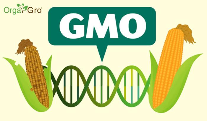 Пару слов о ГМО Гмо, Генная инженерия, Днк, Ген, Glofish, Длиннопост, Видео