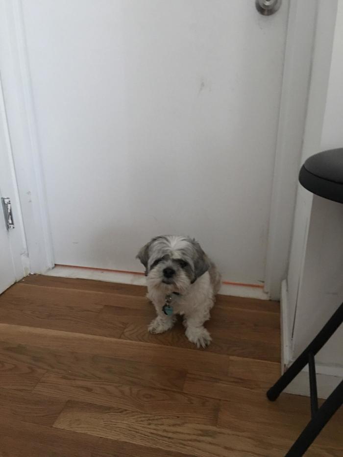 """""""Этот пёс превращается в вышибалу и стоит у двери в душ, когда туда идёт моя девушка"""""""