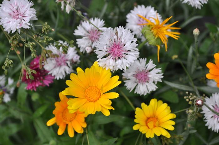 Краски лета Цветы, Бабочка, Фотография, Лето, Яркие цвета, Длиннопост, Моё