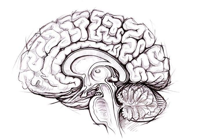 Каково приблизительное количество нейронных связей в мозге