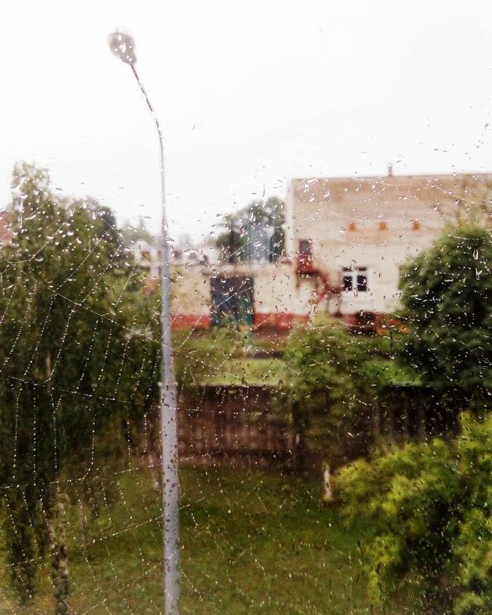 Паутинка Брест, Паутина, Дождь, Беларусь