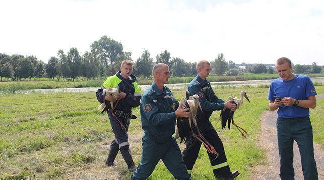 В Ляховичах спасатели вытащили из реки трех аистят Аист, Спасатель, Добрые дела, Мчс, Длиннопост