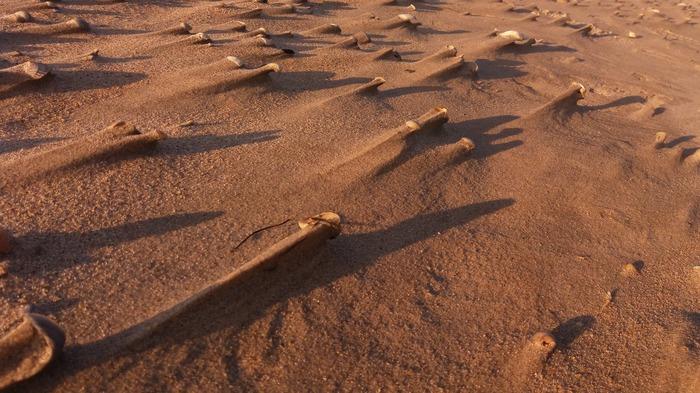 Длительный ветер Фотография, Природа, Пляж, Песок, Ветер, Природные явления