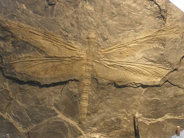 Уменьшение членистоногих Палеонтология, Энтомология, Биология, Зоология, Длиннопост