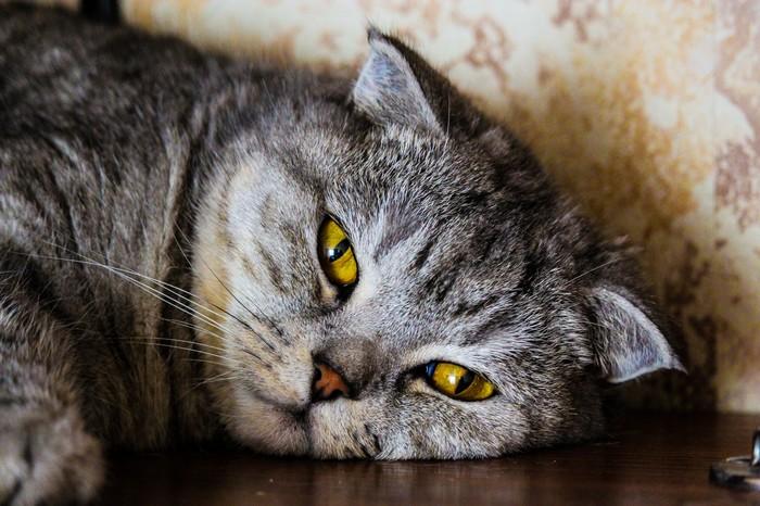 Ужас Кот, Фотография, Youtube, Видео, Ужас