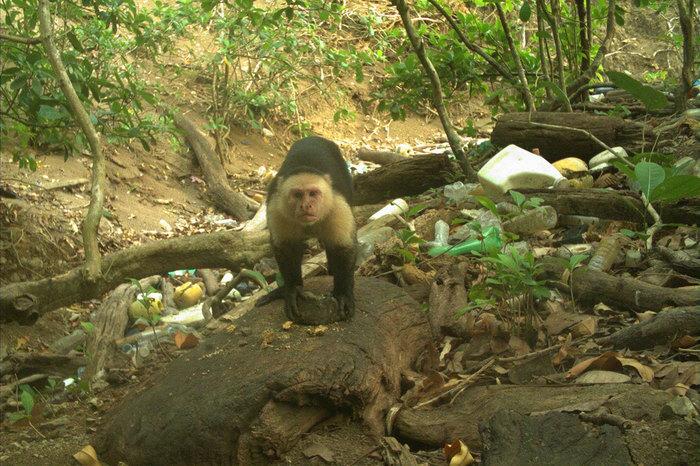 Эволюция Эволюция, Приматы