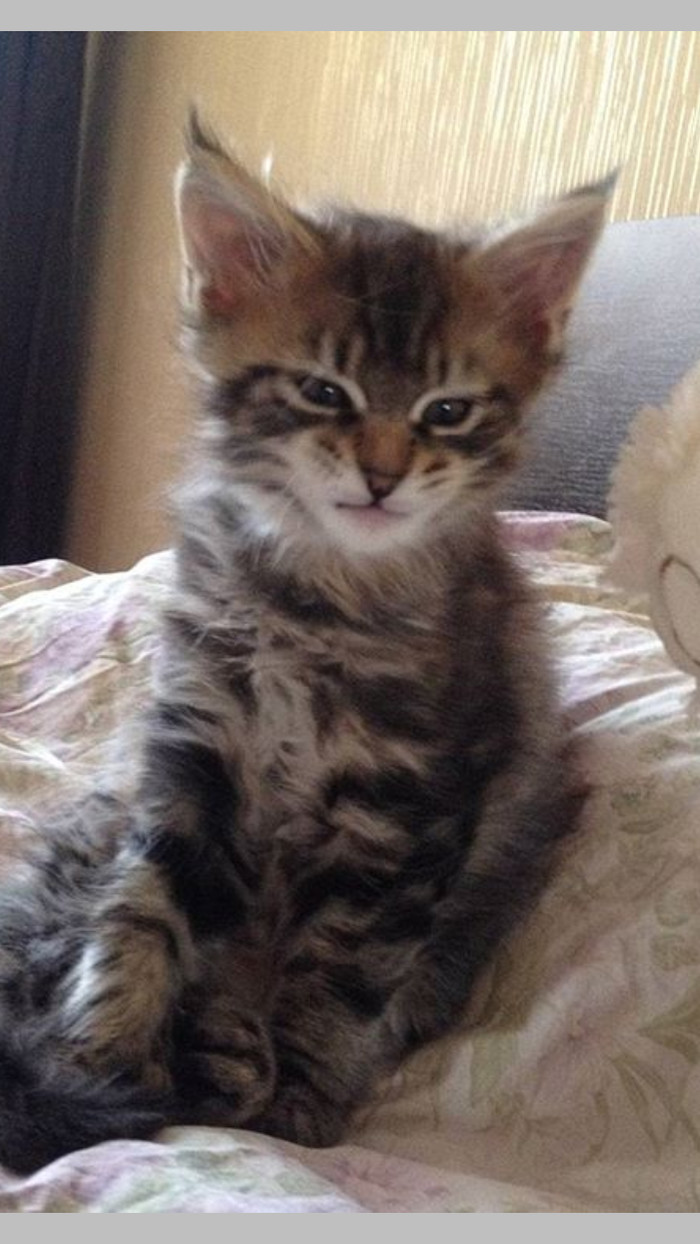 В день кота с воспоминанием о коте. Кот, День кошек, Котомафия