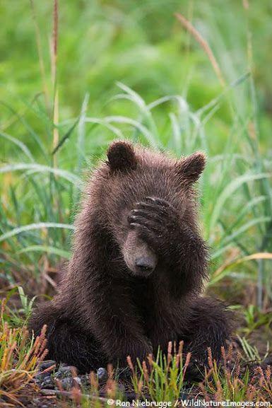 """Медведь, который, видит мои """"успехи""""."""