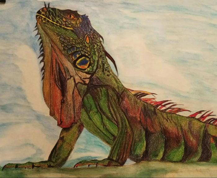 Игуана Игуана, Цветные карандаши, Рисунок, Пресмыкающиеся, Животные, Анималистика