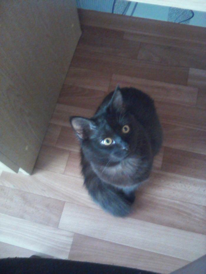 ПРОПАЛ ЧЕРНЫЙ КОТ ЙОШКАР-ОЛА Потерялся кот, Длиннопост, Кот, Йошкар-Ола, Помощь, Без рейтинга