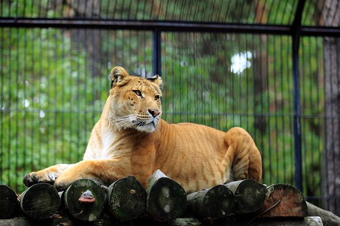 Новосибирский зоопарк Зоопарк, Новосибирск, Животные, Длиннопост, Новосибирский зоопарк, Фотография