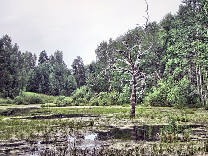 Атмосферное болото. Болото, Дерево, Фотография, Природа