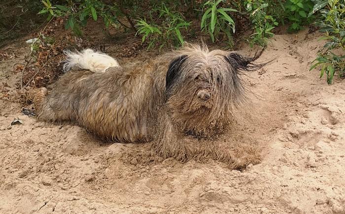 Пескодемон Фотография, Собака, Песок, Вызывайте экзорциста