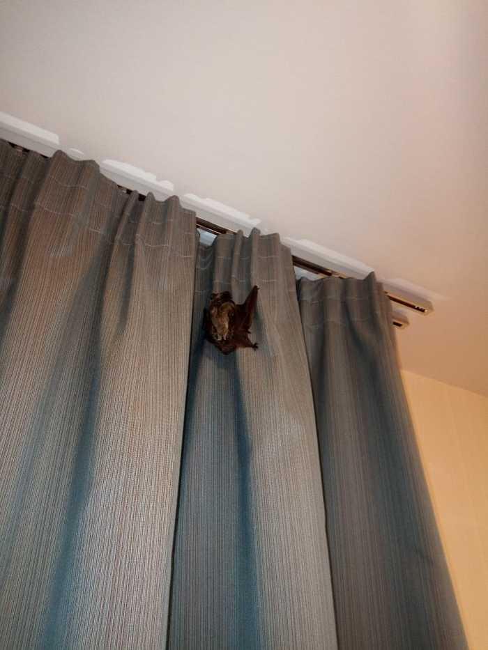 Неожиданный гость)) Летучая мышь, Соседи, Незванные гости, Животные, Длиннопост