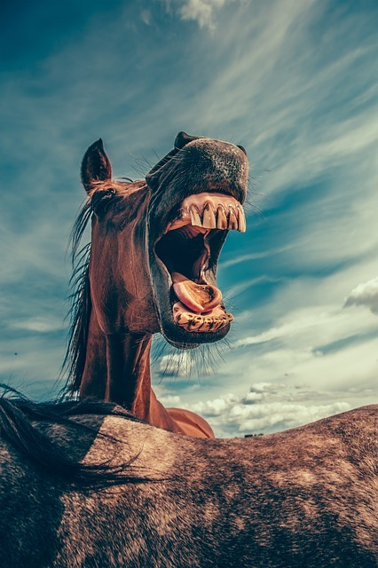 Лошади – опасные животные Лошади, Животные, Техника безопасности, Хобби, Верховая езда, Конный спорт, Длиннопост, Обж