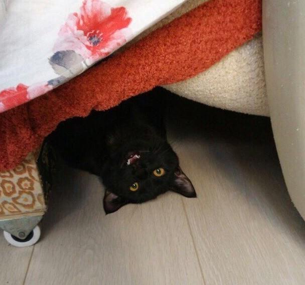 Подкроватный монстр) Монстр под кроватью, Черный кот, Котомафия, Кот, Кот Феликс