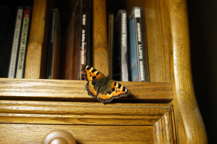 Девушка с хуем и бабочками — img 3