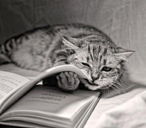 Ищу книгу Ищу книгу, Книги, Без рейтинга, Текст