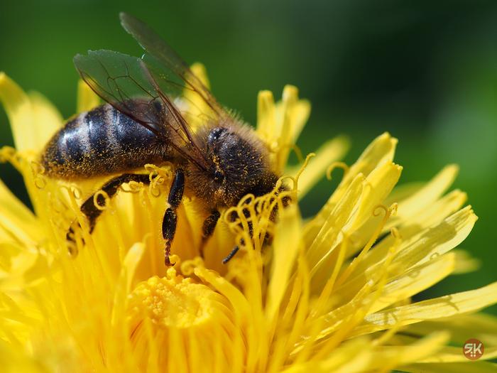 Макромир Фотография, Макро, Бабочка, Пчелы, Стрекоза, Olympus, Длиннопост