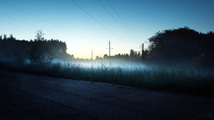 Рандомная подборка. Туман. Капли. Древо. Созревание Фотография, Пейзаж, Яблоки, Сосна, Цветы, Туман, Nikon d5200, Длиннопост