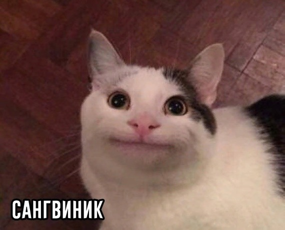 Минутка психологии Психология, Кот, Кто ты?, Темперамент, Юмор, Длиннопост