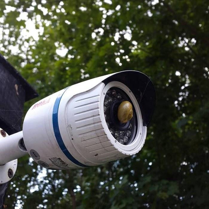 Обычно пауки закрывают обзор камеры своей паутиной, а тут такое....