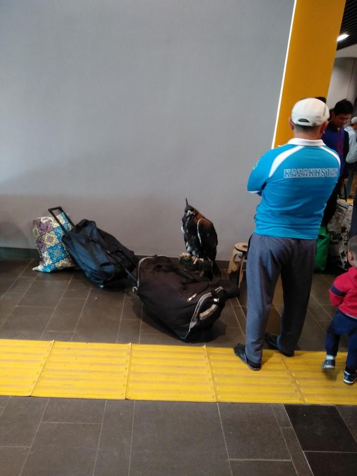 Необычный пассажир. ЖД вокзал в Астане Беркут, Астана, Жд вокзал, Казахстан, Длиннопост