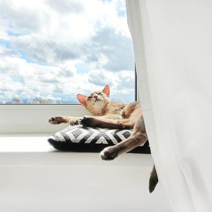 Блаженство Кот, Удовольствие, Животные, Домашние животные