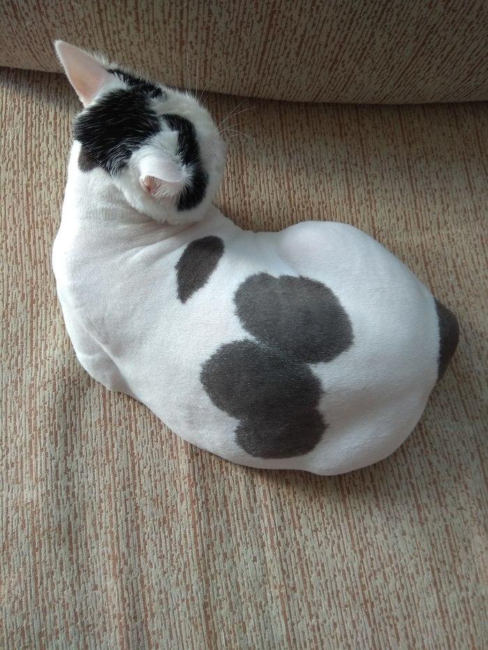 Без шубки) Кот, Стрижка кота, Длиннопост
