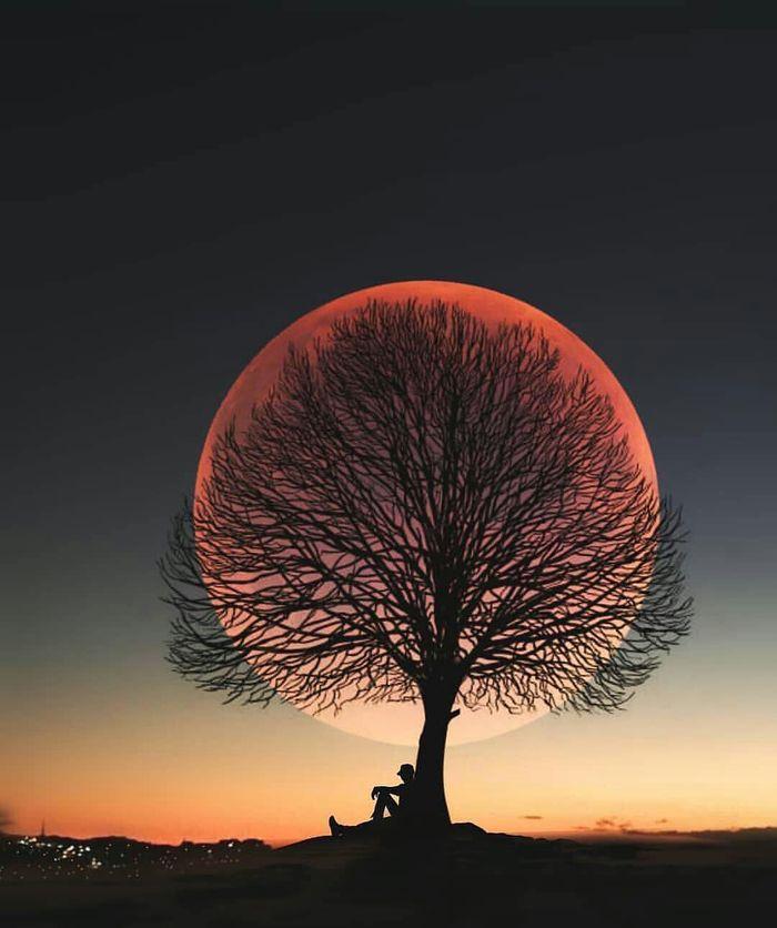 Луна, дерево, человек.