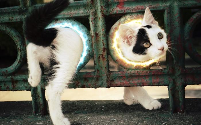 Котик из Portal