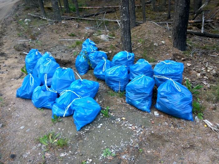 Марафон лесной уборки. Осталось собрать 259 мешков мусора Чистый лес, Марафон лесной уборки, Лес, Уборка, Мусор, Чистомен, Охрана природы, Длиннопост