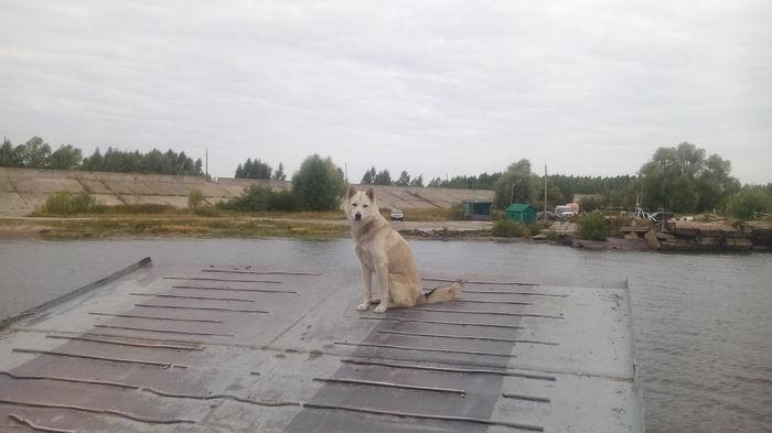 Матрос. Собака, Васюки, Река Волга, Паром