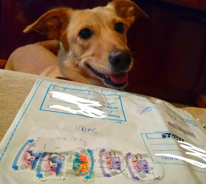 Привет из Питера Собака, Обмен подарками, Летний посткроссинг, Открытка, Санкт-Петербург