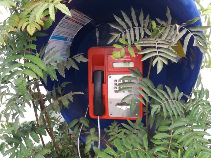Срочный звонок Таксофон, Растительность