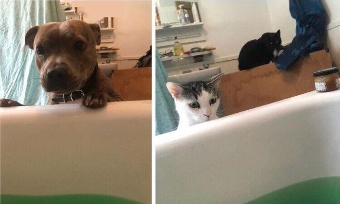 Забота Скоммунизжено, Кот, Собака