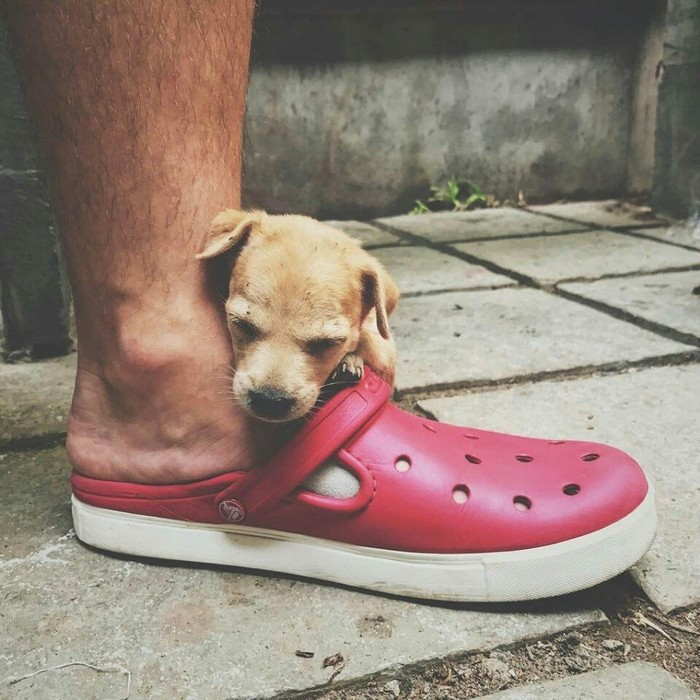 Путешественники спасли умирающего щенка из Индии, и теперь он путешествует вместе с ними. Путешествия, Собака, Собаки и люди, Индия, Туризм, Интересное, Животные, Фотография, Длиннопост